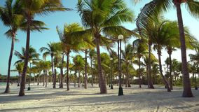 View of tropical beach through coconut palm trees on sunset. Shadows of palm tree fronds fluttering on textured sand. Beach. Turquoise water of the Caribbean stock video