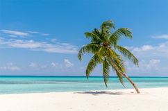View of tropical beach with palms Royalty Free Stock Photos