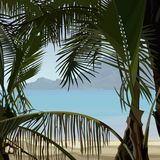 View of tropical coast palms from the bushes Stock Photo