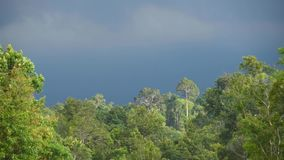 View of tropical forest in Thailand, Asia stock footage