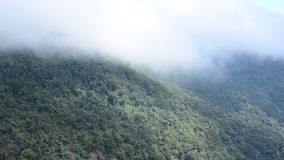 View of tropical forest in Thailand, Asia stock video