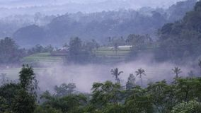 View of the tropical forests of Bali and the onset of dusk. Andreev. View of the tropical forests of Bali and the onset of dusk. TimeLapse. Clouds and fog cloud stock footage