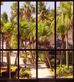 View of a tropical garden Royalty Free Stock Images