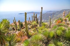 View of tropical garden in the town of Eze Royalty Free Stock Photo