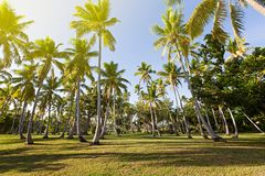 Many palms at tropical island Stock Photography