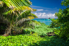 View From a Tropical Island Paradise. Lush vegatation framing the vivid turquoise Caribbean sea as seen from the shore of Goff's Caye in Belize Stock Photo