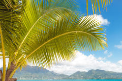 View of a tropical island in the seychelles Royalty Free Stock Photography