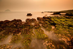 View of tropical rocky beach with green seaweed. View of tropical rocky beach landscape with green seaweed at sunrise in the morning Stock Image