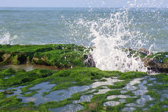 View of tropical rocky beach landscape with green seaweed Royalty Free Stock Image
