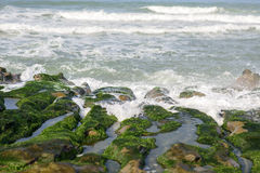 View of tropical rocky beach landscape with green seaweed Stock Images