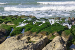 View of tropical rocky beach landscape with green seaweed Stock Photos
