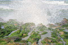 View of tropical rocky beach landscape with green seaweed Stock Image