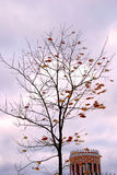 View of Tsaritsyno park in Moscow. Autumn tree. Royalty Free Stock Photography