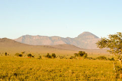 View of the Tsavo East savannah Royalty Free Stock Image