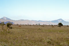 View of the Tsavo East savannah Stock Photo