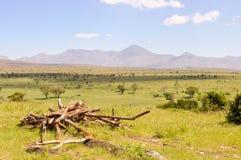 View of the Tsavo East savannah in Kenya Royalty Free Stock Images