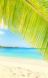 View at turquoise blue lagoon through coconut palm tree branch Royalty Free Stock Image