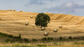 View of tuscan fields and hills in Maremma region in Italy Royalty Free Stock Image