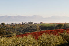 View Of Tuscany Hills Stock Photo