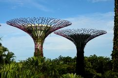 View of two artificial Supertrees at Gardens by the Bay Singapore. Singapore - May 31, 2016: A view of two Supertrees at Singapore's Gardens by the Bay park Royalty Free Stock Images