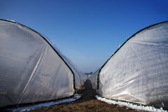 View between two greenhouse tunnels from polythen plastic on an Stock Photography