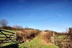 Hedge lined country trackway with gates Royalty Free Stock Image
