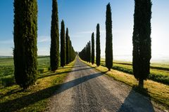 View of typical road in Tuscany, lined with cypress trees. In beautiful morning light Royalty Free Stock Photo