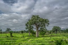 View with typical tropical landscape, baobab trees and other types of vegetation, cloudy sky as background. Trip through Angola's lands 2018: View with royalty free stock photos
