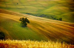 View of typical  Tuscany landscape Royalty Free Stock Photos
