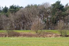 View on uncultivated grass area and tree area in rhede emsland germany. Photographed during a sightseeing tour in rhede emsland germany stock image
