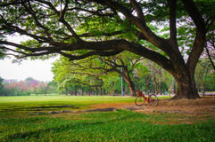 View under big tree with bicycle in Public Park, Vignette style Royalty Free Stock Image