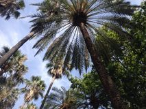 View under palm trees Royalty Free Stock Images