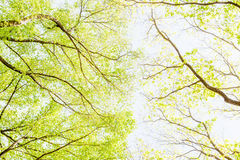 View from under shade of tree in green forest, Central Park. Royalty Free Stock Photo