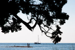 View under tamarix on people on promontory, Corsica/ France Stock Photos