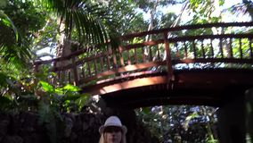 View under the trees at Jungle park. Walking under the Plam trees at Jungle park stock video footage