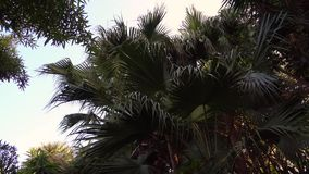 View under the trees at Jungle park. Walking under the Plam trees at Jungle park stock video