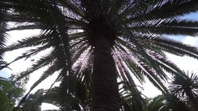 View under the trees in the park. Walking under the Plam trees in the park stock video footage