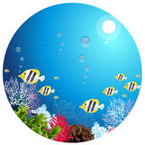 The view of Under water Stock Photography