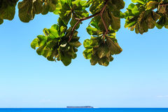 View from underneath a tree on a tropical island Royalty Free Stock Photo