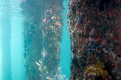 View from the Underwater Observatory, Busselton Jetty, WA, Australia. View from the Underwater Observatory, Busselton Jetty, Western Australia, Australia royalty free stock photo