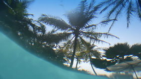 View from underwater of pool on palm trees over water.  stock footage