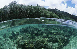 View of underwater scene and surface level view Stock Photography