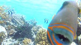 View Of Underwater Tropical Ocean Stock Photos