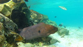 View Of Underwater Tropical Ocean With Moray Eel stock video