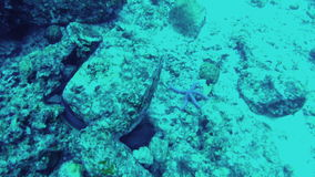 View of underwater world. Seabed, close-up. Beautiful view of underwater world. Seabed, close-up stock footage