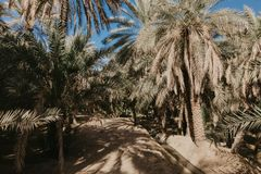 View of the unesco enlisted oasis in Al Ain, UAE. Image stock image