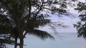 View of uninhabited sandy beach with palm tree. stock footage