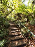 View up the 1000 steps at the Dandenong ranges Royalty Free Stock Image