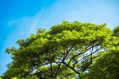 View up to sky under the tree Royalty Free Stock Image
