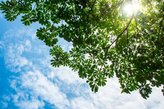 View up to the sky under the tree. View up to sky under the tree. sunlight on sky Royalty Free Stock Photos